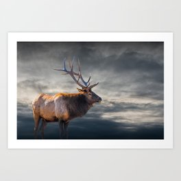 Bull Elk in Yellowstone National Park Art Print