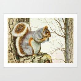 Fuertes, Louis Agassiz (1874-1927) - Burgess Animal Book for Children 1920 (Grey Squirrel) Art Print
