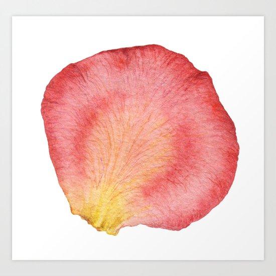 Rose Petal 01 Art Print