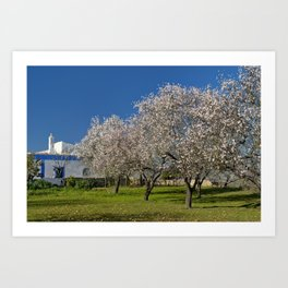 An Algarve almond orchard in Spring Art Print