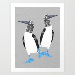 Blue-footed booby Kunstdrucke