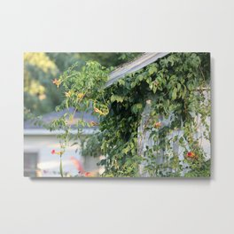 Honeysuckle Vines on Barn Metal Print