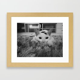 kitty ready to pounce Framed Art Print