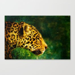 Jaguar in the Grass Canvas Print