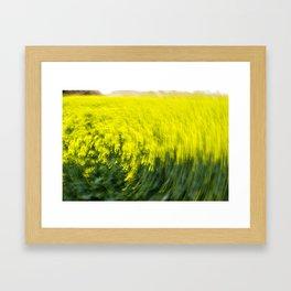 Canola Framed Art Print