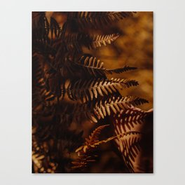 Autumn Fern Tree Leaf Brown Coffee Color Canvas Print