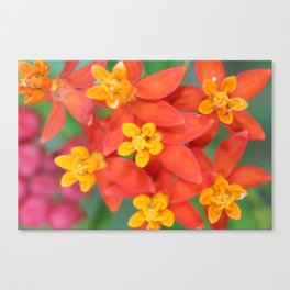 Succulent Red and Yellow Flower II Canvas Print