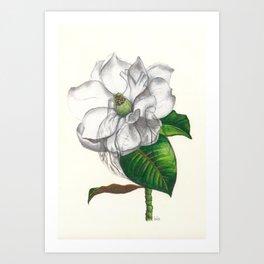 Heart of a Magnolia Art Print