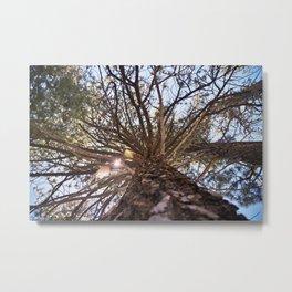 Never Stop Looking Up (Tree 1) Metal Print
