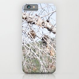 Nature - Tree 2 iPhone Case
