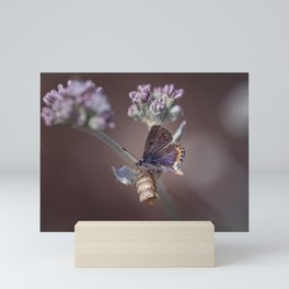 Butterfly IV Mini Art Print