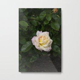 Impressive Rose Metal Print