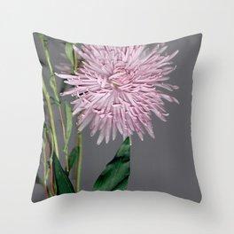 pale pink aster botanical Throw Pillow