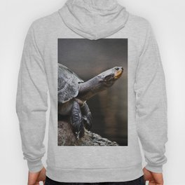 Turtle in the Mist Hoody