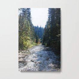 Fall Trees Photography Print Metal Print