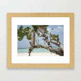 """""""Be A Star!"""" Family in Aruba Framed Art Print"""