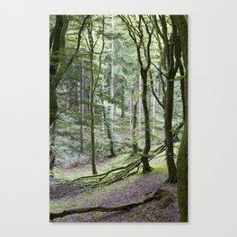 Trees - Rold Skov Leinwanddruck
