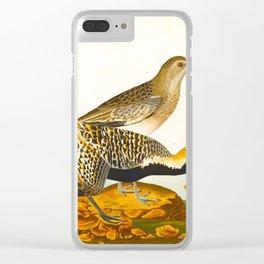 Grey plover John Audubon vintage scientific bird illustration Clear iPhone Case