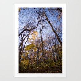 Out of the Woods - Fall Forest Photography Art Print