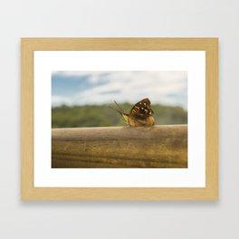 Butterfly against Blur Background at Iguazu Park Framed Art Print