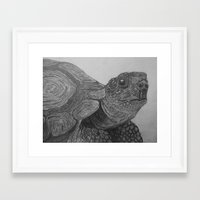 tortoise Framed Art Prints featuring Tortoise by nosila.art