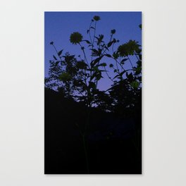 weeds and night sky Canvas Print