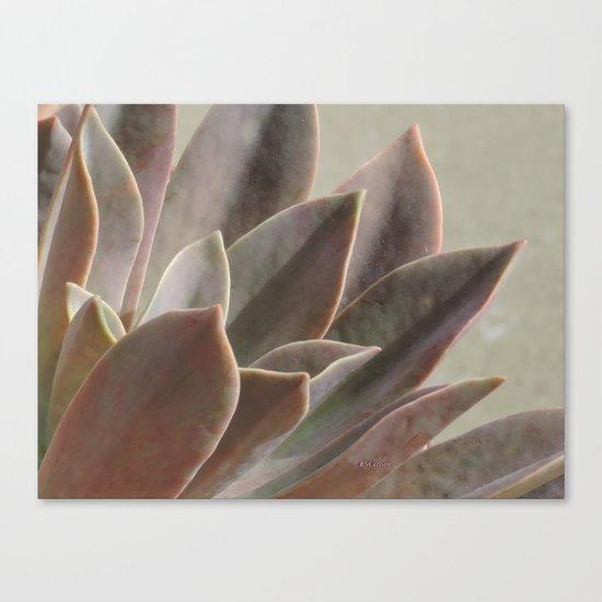 TEXTURES: Succulent Looks East Canvas Print
