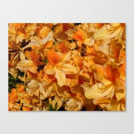 All in Orange Canvas Print