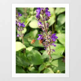 Garden Bee, 2 Art Print