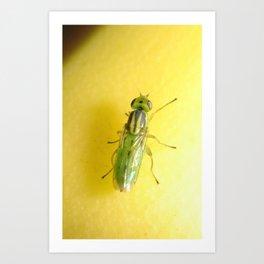 Alien Fly (iPhone skin) Art Print