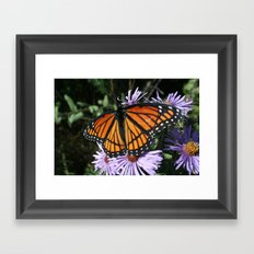 Viceroy Framed Art Print