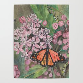 Monarch Butterfly and Milkweed Flowers Poster