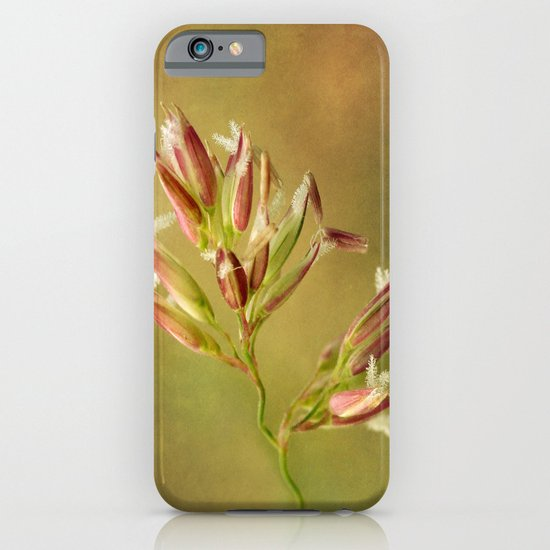 Canary Reed Grass Flowers iPhone & iPod Case