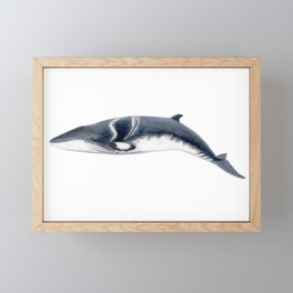 Baby Minke whale Framed Mini Art Print