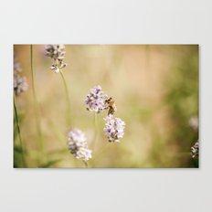 little bee Canvas Print