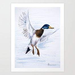 Duck bird art Art Print