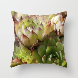 Common Houseleek Plant Close Up Throw Pillow