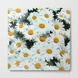Daisies explode into flower Metal Print
