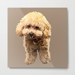 Muffin the toy poodle Metal Print