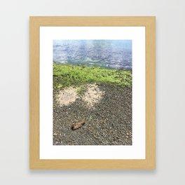 Coastal Algae Framed Art Print