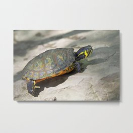 Turtle on the rock Metal Print