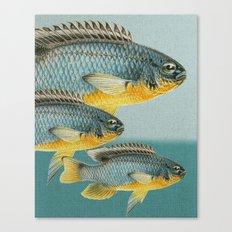 Fish Classic Designs 12 Canvas Print