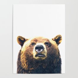 Bear portrait Poster