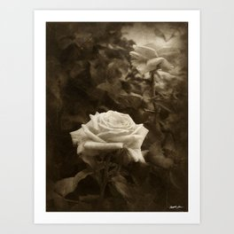 Pink Roses in Anzures 5 Antiqued Art Print