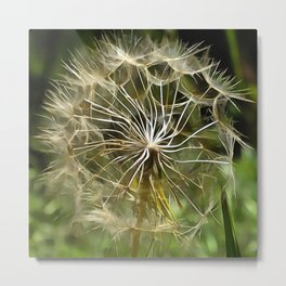 Tragopogon Wildflower Salsify Metal Print