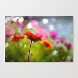 Sunkissed Spring Canvas Print