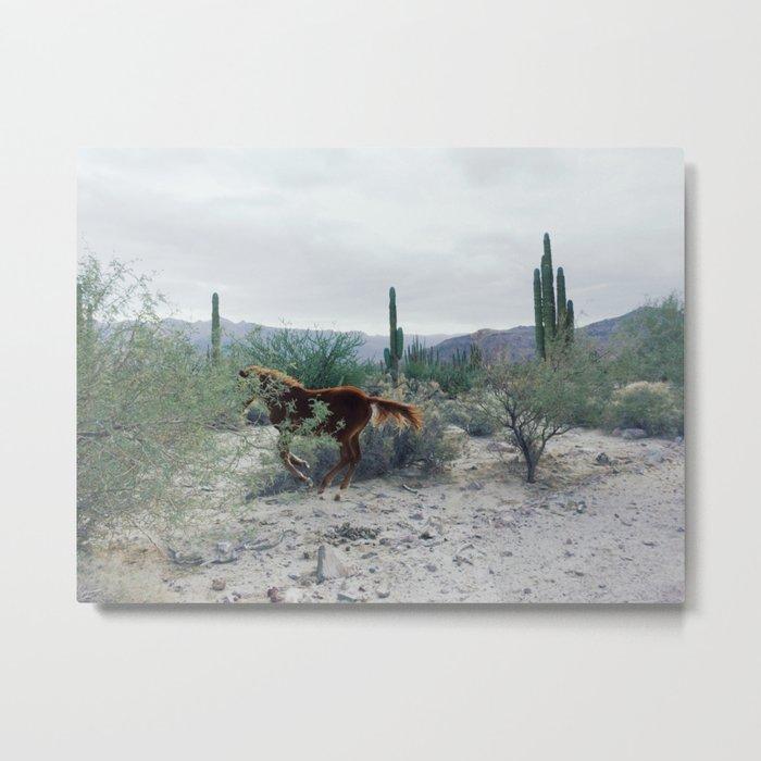 Mexican Horse Hide Metal Print