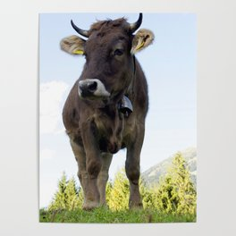 Cow on the pasture Poster