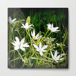 White wildflowers. Metal Print