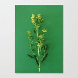 Green summer   Flower Photography Canvas Print